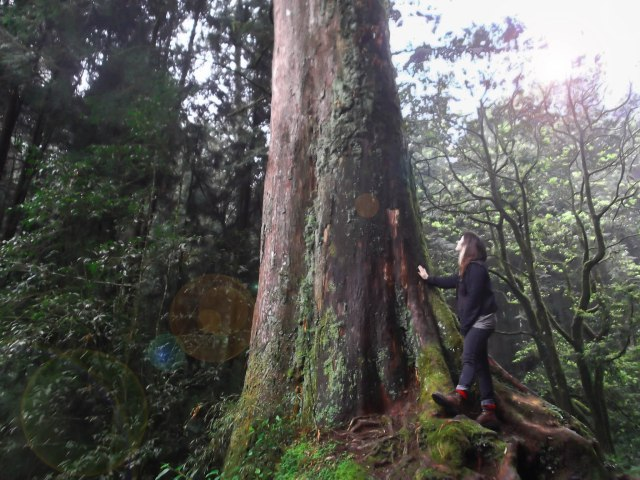 At the base of a 3500 year old red cedar, or hinoki tree, on Mt. Ali.