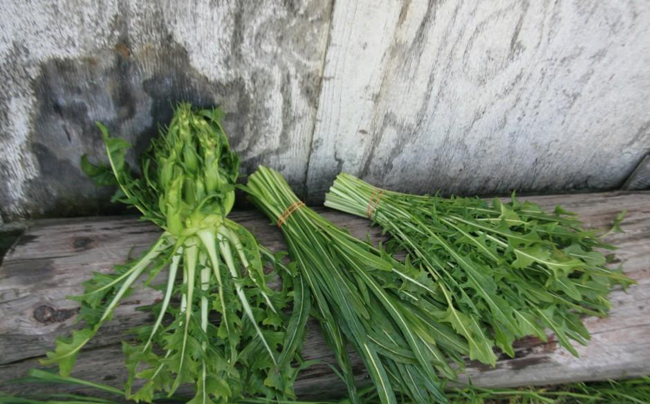 Varietals of Dandelion greens.