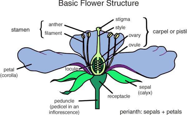 flower_term1