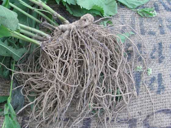A close-up of the roots.