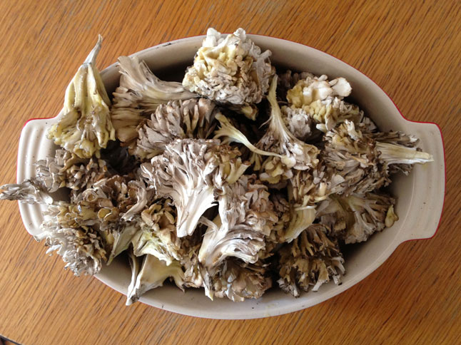 Maitake mushrooms pulled apart to be cooked, showing off their internal branching structure.