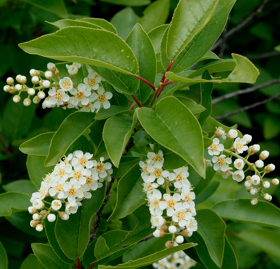 Close up of the flowers and leaves.