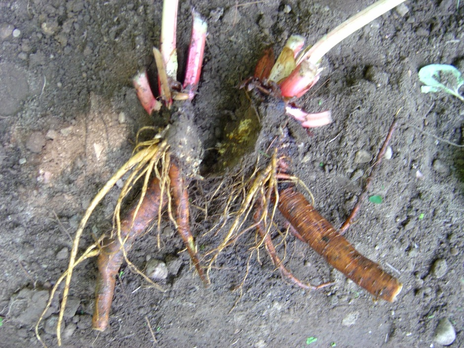 The roots of the plant