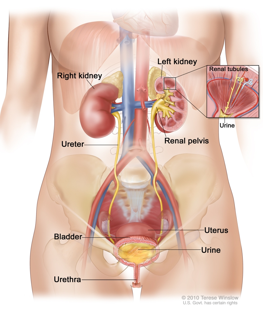 pain-in-left-side-of-stomach-area-199